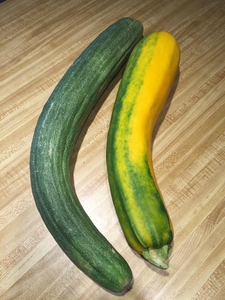 cucumber and squash